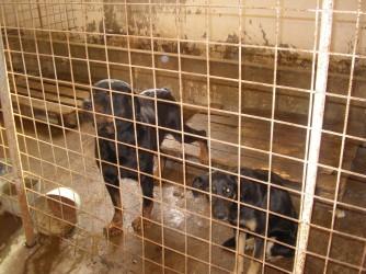 În 2012: Sute de maidanezi, eutanasiaţi în Zalău şi Şimleu