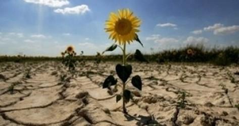 Seceta îi sperie pe agricultori