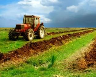 Tinerii investesc în agricultură