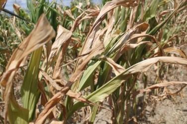 Un tânăr a distrus culturile agricole ale localnicilor din Lompirt