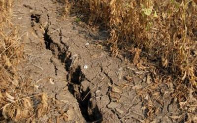 Fermierii sălăjeni nu se înghesuie la ajutorul de minimis