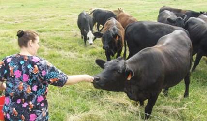 Aproape 20 de fermieri sălăjeni ar putea înapoia subvenţiile