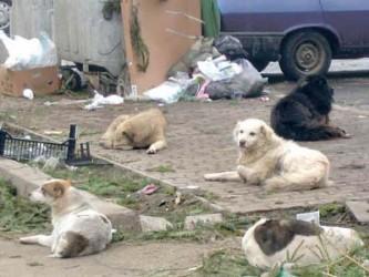 Campanie de vaccinare a câinilor din Pustă Vale