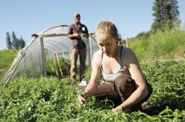 Tinerii sălăjeni se înghesuie să-şi facă ferme cu bani europeni