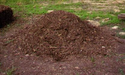 Frunzele uscate – transformate în compost pentru flori în Zalău