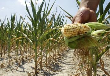 Fermierii sălăjeni primesc despăgubirile pentru secetă