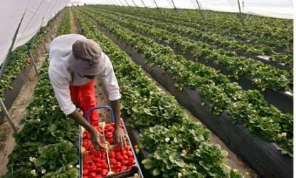 Noile taxe din agricultură, pe scurt