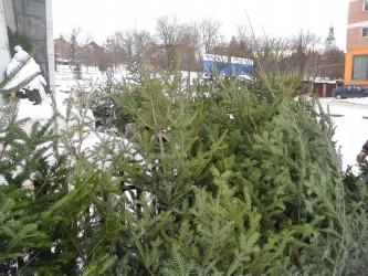 Cât ne costă pomul de Crăciun