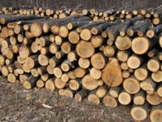 Taman înainte de alegeri: Banii pentru încălzirea cu lemne, acordaţi înainte de termen