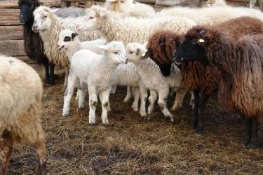 Bani europeni pentru 49 de ferme de semi-subzistenţă din Ileanda