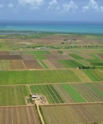 Primăriile sălăjene nu şi-au actualizat registrele agricole