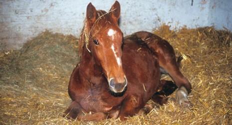 Sălaj: Zeci de cai – depistaţi cu SIDA anul trecut