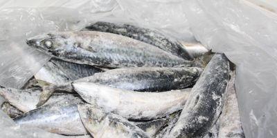 Alertă alimentară în Sălaj! Peşte infestat pe mesele sălăjenilor