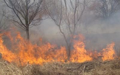 """A ars vegetaţia uscată de pe """"Fabricii"""""""