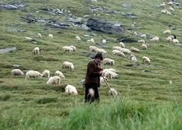 Ciobanul criminal, arestat preventiv pentru 29 de zile