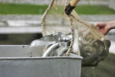 Fonduri nerambursabile pentru pescuit