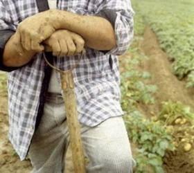 O treime din fermierii sălăjeni au cerut sprijinul pe suprafaţă