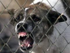 A ajuns la Urgenţă după ce a fost muşcată de câine