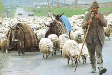 Fermierii sălăjeni pot lua drumul APIA