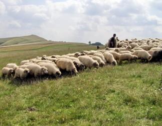 Ciobanul criminal riscă închisoare pe viaţă