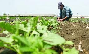 Fermierii sălăjeni vor fi sancţionaţi dacă nu respectă regulile