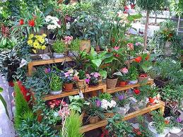 Florari amendati in luna martie