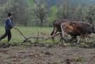 Fermierii sălăjeni sunt verificaţi dacă respectă cerinţele europene