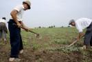 Fermierii sălăjeni au cerut subvenţii pentru 100.000 de hectare de teren agricol