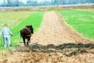 Aproape 24.000 de fermieri sălăjeni au cerut subvenţii pentru terenurile deţinute