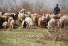 Subvenţiile pentru animale au ajuns la fermierii din Zalha şi Cristolţ