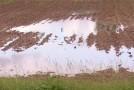 Ploile au provocat pagube minore în Sălaj