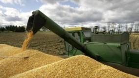 Producţia de grâu, în creştere