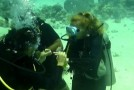 O zălăuancă a fost cerută în căsătorie în adâncurile  Mării Roşii