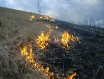 Incendiu de vegetaţie uscată în Valea Miţii