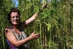 In și cânepă cultivate în sistem gospodăresc, după 25 de ani de pauză