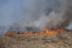 Viţă de vie distrusă de flăcări în Cuceu