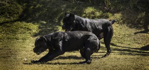 Cazul zălăuanului devorat de animale a ajuns pe masa procurorilor
