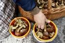 8,65 de euro pe oră la cules de ciuperci