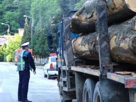 Poliţiştii au intrat cu drujba în Mafia lemnului din Sălaj