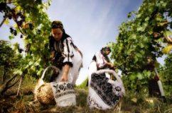 10 motive pentru a face vin de casă cu must de la Jidvei