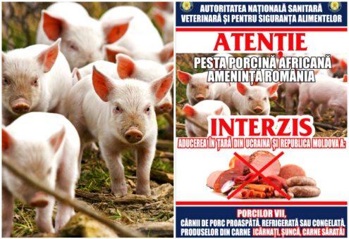Risc maxim: Pesta porcină africană ameninţă Sălajul