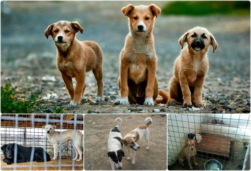 """Despre infernul de la ecarisaj: zeci de câini așteaptă până în ultima clipă să fie salvați din adăpostul """"Citadin"""""""