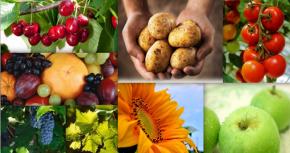 AFIR: milioane de euro pentru investiții în procesarea și marketingul produselor agricole și pomicole