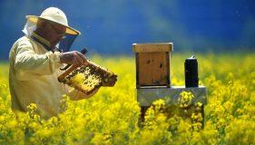 Termen limită pentru depunerea cererilor de sprijin în apicultură