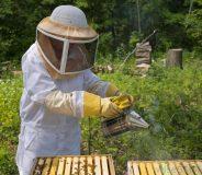 Sprijin guvernamental pentru apicultori