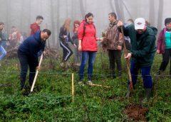 600 puieți de stejar au fost plantați pe Meseș