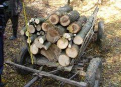 În doar un an, peste 1.000 de metri cubi de lemn tăiaţi ilegal din pădurile Sălajului