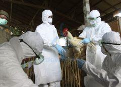 Focar de gripă aviară în județul vecin. După problemele cu carnea de porc, încep și cele cu carnea de pui