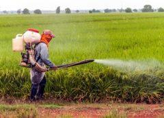 Penultimii din UE la produse agricole naturale: Comisia Europeană ne forțează să renunțăm la pesticide